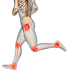 Male medical skeleton running legs