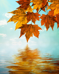 Autumn water reflection background