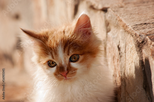Ginger small cat