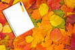 Notebook and autumnal leaves