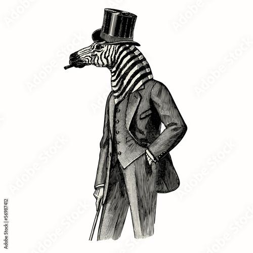 Zebra man - 56987412