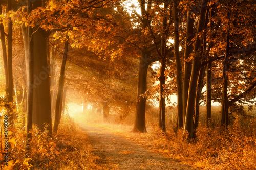 Zdjęcia na płótnie, fototapety na wymiar, obrazy na ścianę : Wanderweg in goldener Herbstsonne und Nebel