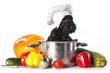 Scotch terrier kitchen boy in a saucepan