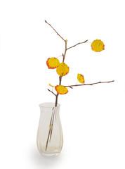 twig of aspen tree