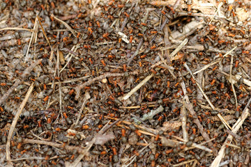 ants and ant hill