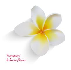 Balinese flower frangipani
