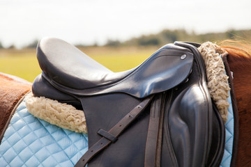 Saddle on a horse