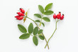 Rose hip (Rosa canina) with leaves