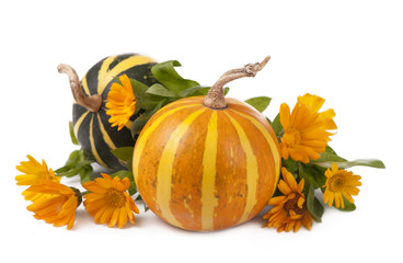 group of pumpkins of different shapes and sizes surrounded by