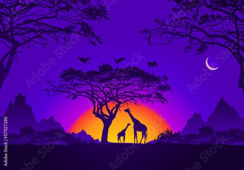 Papiers peints Violet African sunset