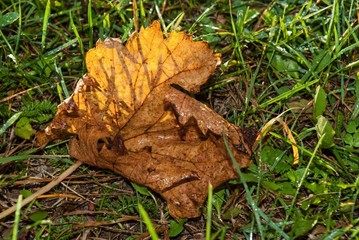 Magic brown autumn leaves