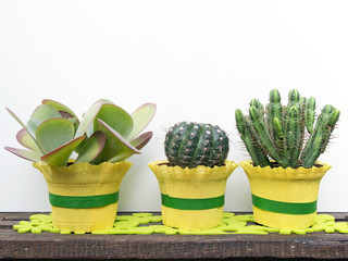 succulent cactus plants in rectangular