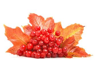 Red viburnum berries and autumn leaves
