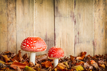 Fly agaric mushrooms against an old wooden background