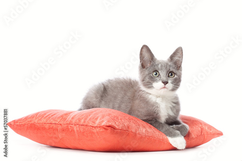 Kitten is laying on pillow.