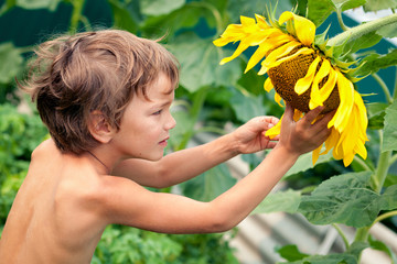 Beautiful little boy and sunflower