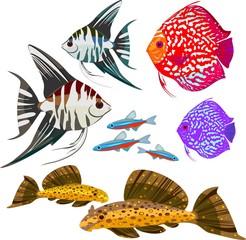 Set of different freshwater aquarium fishes