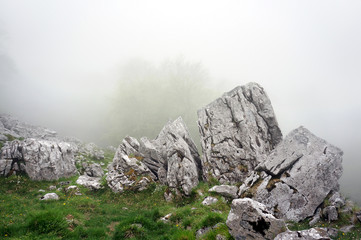boulder and big rocks in foggy forest