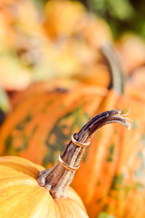 Two wedding rings on pumpkin decoration closeup