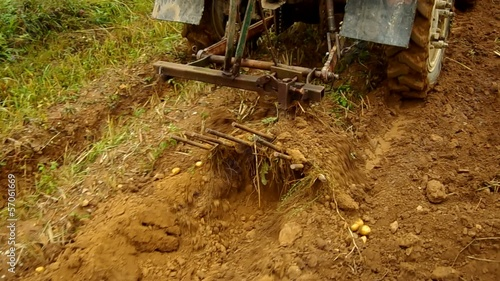 Digging potatoes with tractor