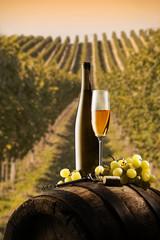 still life with white wine on vineyard background