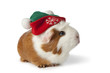 Cute guinea pig with christmas hat
