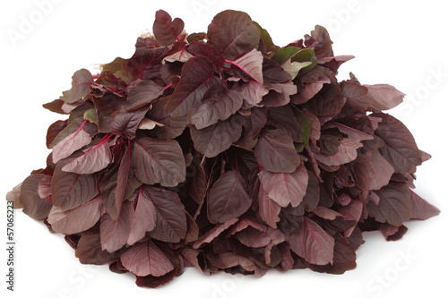 Fresh red amaranth