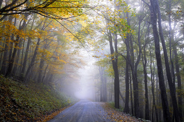 Foggy Road in Autumn