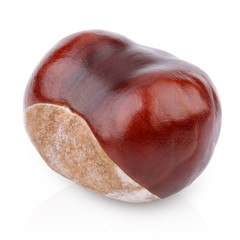 Single chestnut isolated on white with clipping path