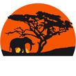 Fototapeten,elefant,afrika,tierpark,bigger