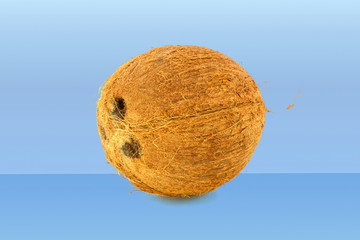 coconut whole in blue background