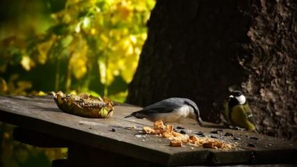 Птичья карусель