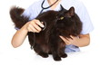 黒猫を診察する獣医師