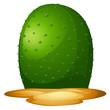 A plain cactus