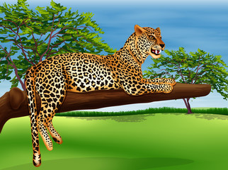 A leopard lying above the branch of a tree
