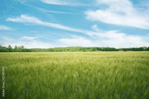 Fototapeten,feld,natur,wolken,corn
