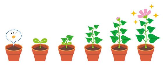 植物 育生 生長