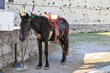 Brown horse. Monte Sant'Angelo. Puglia. Italy.