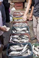 Fish market,Damietta,Egypt