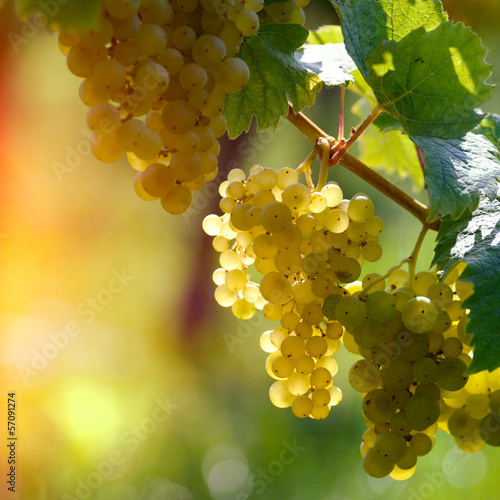 Leinwandbild Motiv White grapes