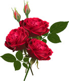 three red roses bunch isolated on white