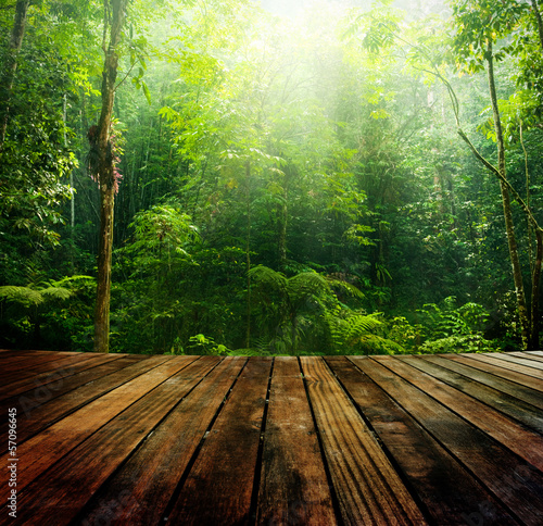 Green forest. - 57096645