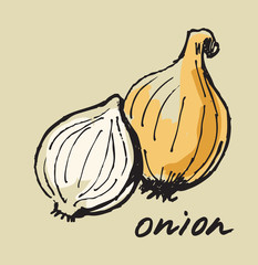 hand drawn onion
