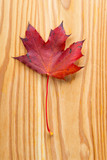 maple leaf on wooden ground