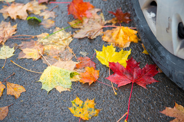danger in fall- time