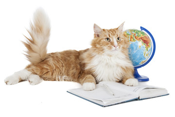 cat with a globe on a white background in studio