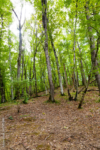 forest in caucasus mountains