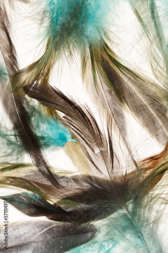Color feathers - 57111497