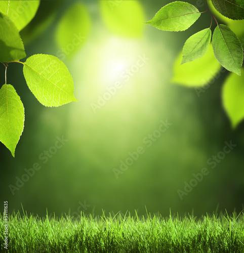 Spring forest  background