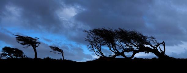 Trees on Tierra del Fuego, Patagonia, Argentina